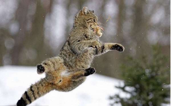 you think cats cant fly think again after you look at these photos 10 pictures 4