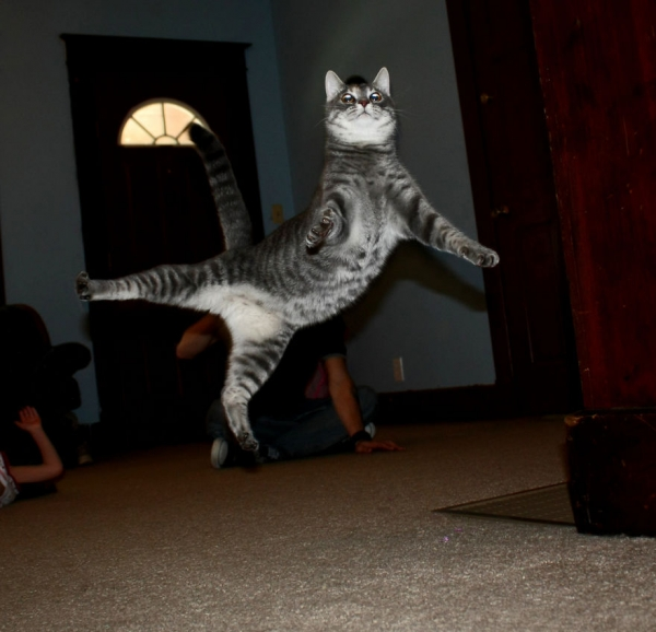 you think cats cant fly think again after you look at these photos 10 pictures 5