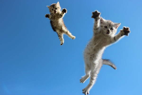 you think cats cant fly think again after you look at these photos 10 pictures 6