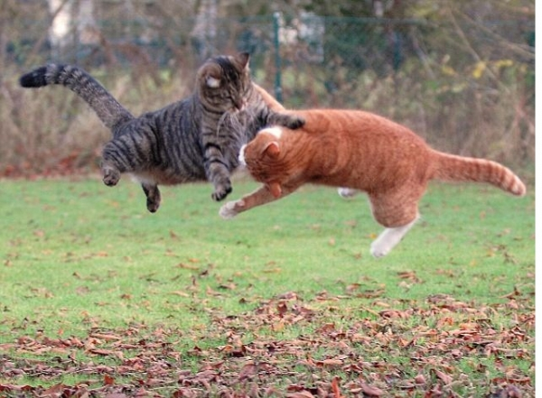 you think cats cant fly think again after you look at these photos 10 pictures 7