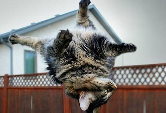 you think cats cant fly think again after you look at these photos 10 pictures 8