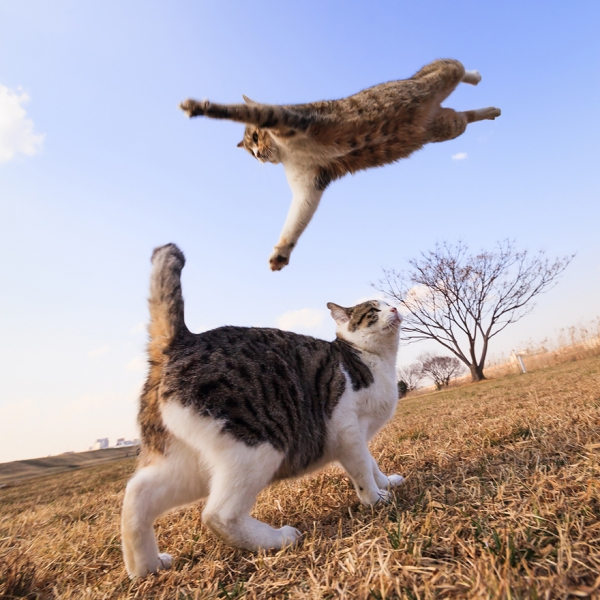you think cats cant fly think again after you look at these photos 10 pictures 9