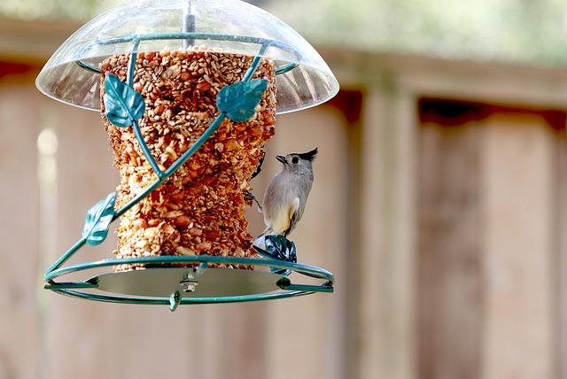 Tufted titmouse at bird feeder